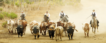 spain-luxury-travel-concierge-dmc-andalusia-bulls-thumb
