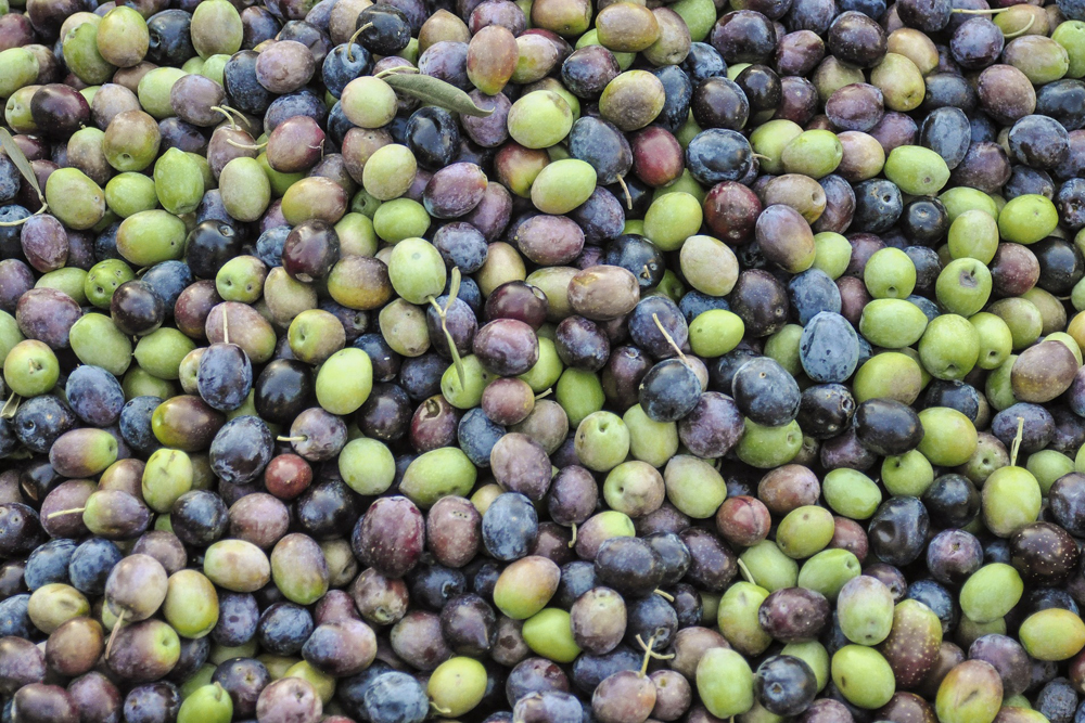 spain-luxury-travel-concierge-dmc-andalusia-olives