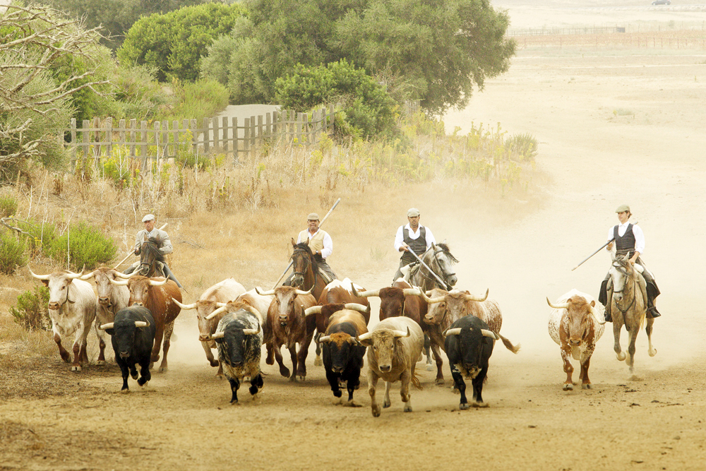 spain-luxury-travel-concierge-dmc-andalusia-bulls-1