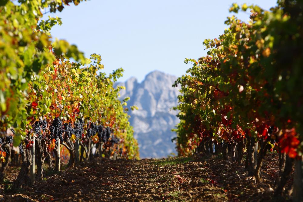 ©basquetour spain-luxury-travel-concierge-dmc-euskadi-rioja-alavesa-cellar-wine-vineyard