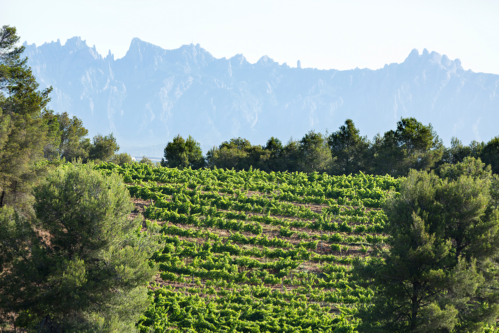 spain-luxury-travel-incoming-dmc-concierge-catalonia-cellars-wine-montserrat-eco-5